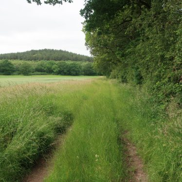 Site of Possible Hermitage 500m South of Alcock's Arbour, Haselor.
