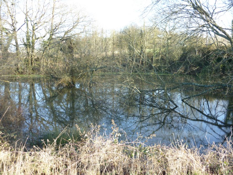 Photo of Poss fishpond, N of Cryfield Ho (Warwick Uni Eval): dug into the side of a hill | Image courtesy of William Arnold, February 2020