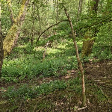 Site of Possible Holy Well to North of Church, Honiley.