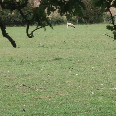 Ridge and Furrow cultivation  in Radford Semele