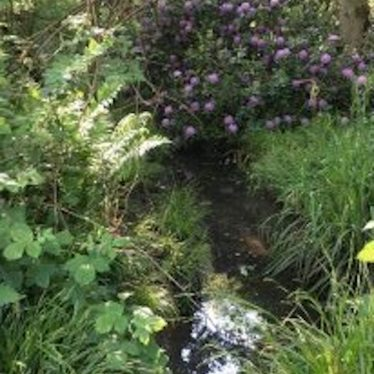 Stream at bottom of photo with ferns and flowers growing overhead   Image courtesy of Tina Hayes