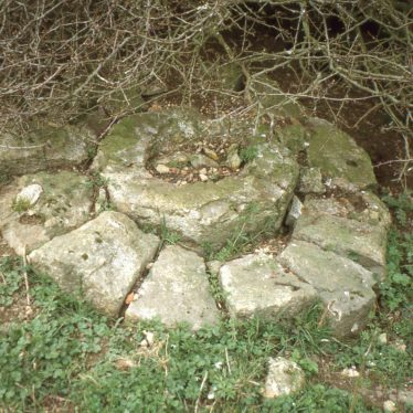 Remains of french millstone under bush   Image courtesy of Tim Booth
