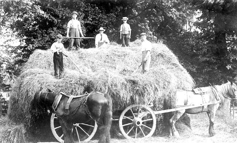 Haymaking on Asylum Farm, Hatton.  1900s |  IMAGE LOCATION: (Warwickshire County Record Office)