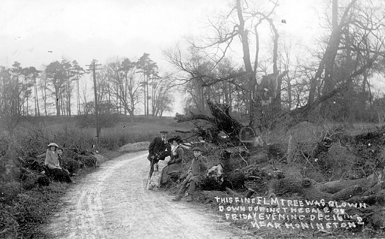 Elm tree in country lane near the village of Honington, blown down in gale of Friday evening,  December 16th. Adults and children posing with tree.  1910s |  IMAGE LOCATION: (Warwickshire County Record Office)