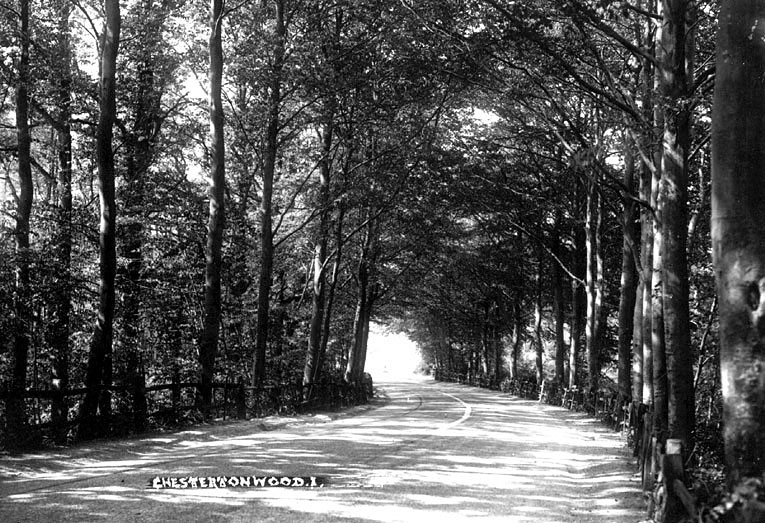 Chesterton Woods, with the road running through.  1930s. The route of this road has been altered from that seen here. |  IMAGE LOCATION: (Warwickshire County Record Office)