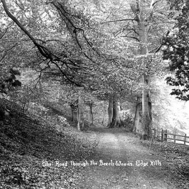 Edgehill.  Road through beech woods