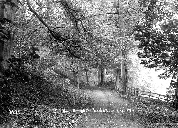 Road through the beech woods at Edgehill.  1930s |  IMAGE LOCATION: (Warwickshire County Record Office)