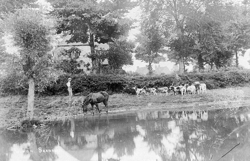 Rural scene by the River Leam  with Jacob sheep(?) and their shepherds. Leamington Hastings.  1910s    IMAGE LOCATION: (Warwickshire County Record Office)