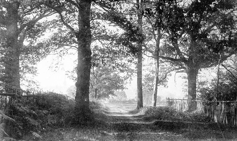 View from Maxstoke Park gates.  1900s    IMAGE LOCATION: (Warwickshire County Record Office)