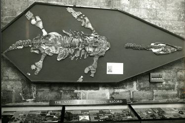 Warwickshire in 100 Objects: Wilmcote Plesiosaur
