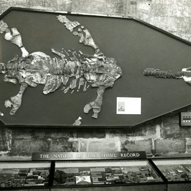 Wilmcote Plesiosaur on the ground floor of Market Hall Museum in 1974, shortly before a major refurbishment. | Image courtesy of Warwickshire Museum