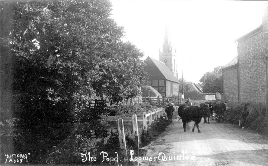 Cattle drinking at The Pond, Lower Quinton.  1920s .    IMAGE LOCATION: (Warwickshire County Record Office)