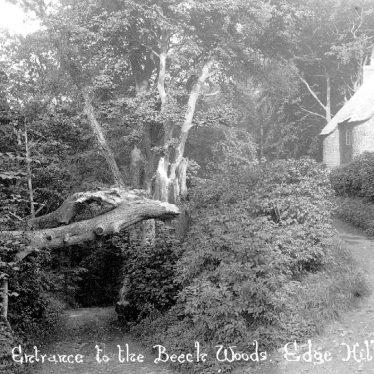 Radway.  Beech Woods