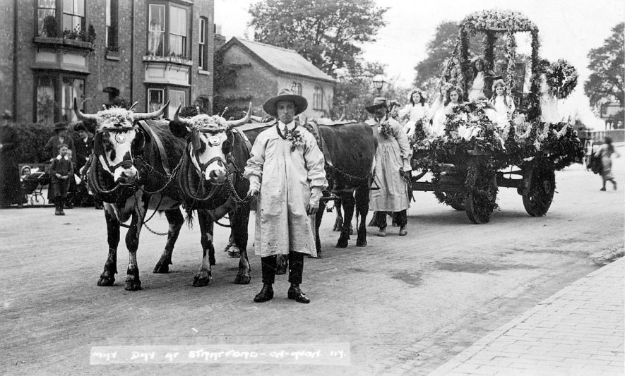 Stratford upon Avon May Day procession with oxen pulling a decorated float.  1910s |  IMAGE LOCATION: (Warwickshire County Record Office)