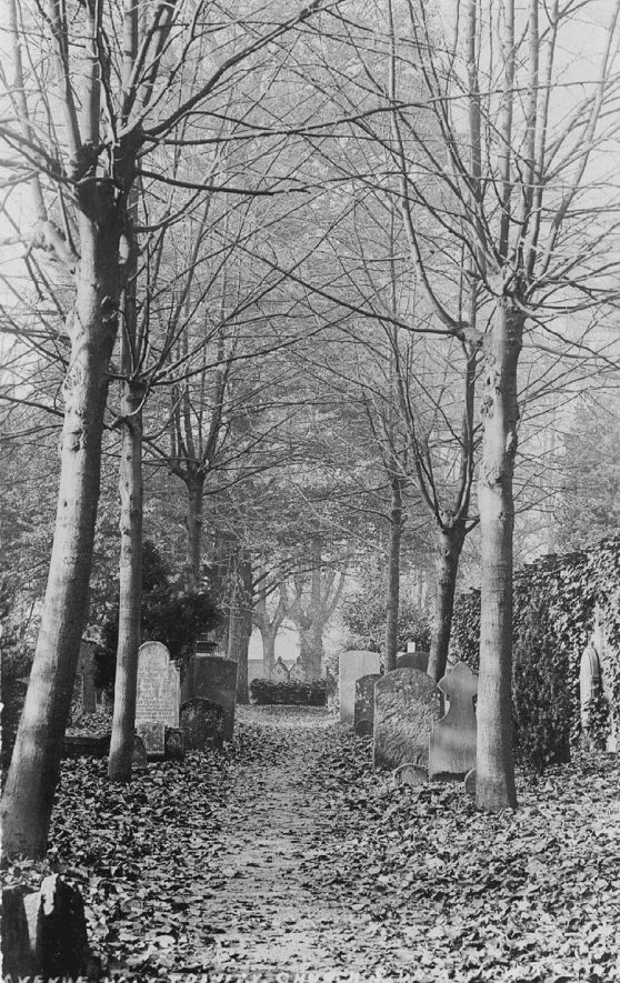 Gravestones and avenue of trees at Holy Trinity Church, Stratford upon Avon.  1900s |  IMAGE LOCATION: (Warwickshire County Record Office)