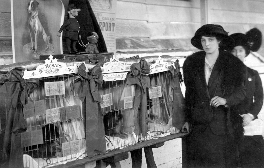 Stratford on Avon Dog Show.  1910 |  IMAGE LOCATION: (Warwickshire County Record Office)