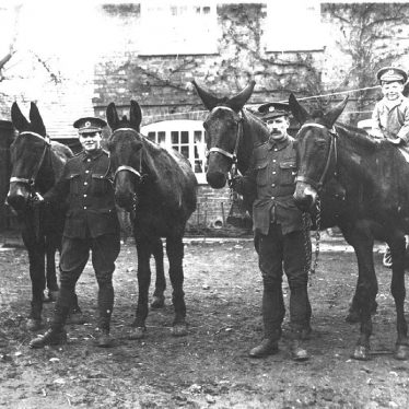 Long Itchington.  Soldiers with mules