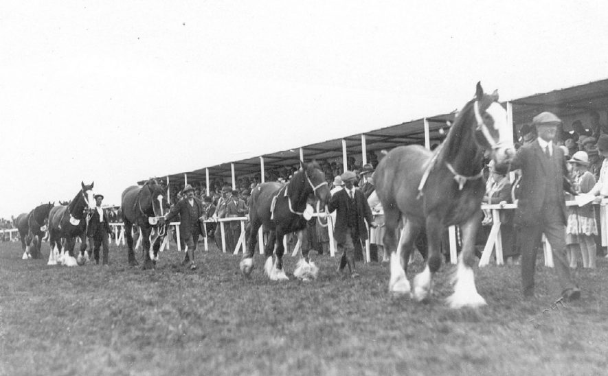 Studley Horse Show, showing a parade of heavy horses.  1920s |  IMAGE LOCATION: (Warwickshire County Record Office)