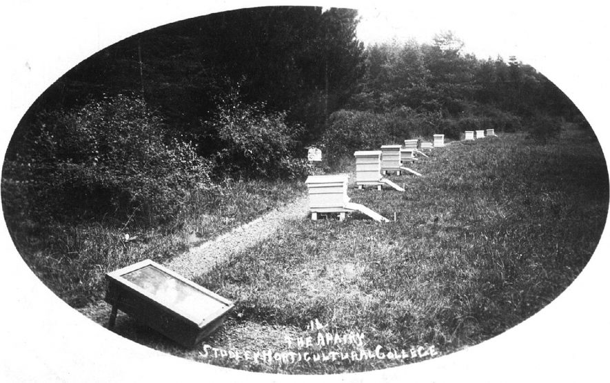 The apiary at Studley Horticultural College.  1900s |  IMAGE LOCATION: (Warwickshire County Record Office)