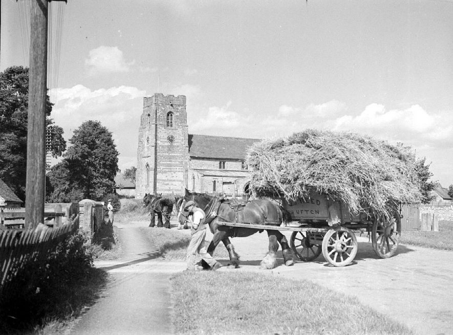 Two hay carts making their way up Ufton Hill with the church in the background.  1951 |  IMAGE LOCATION: (Warwickshire County Record Office)