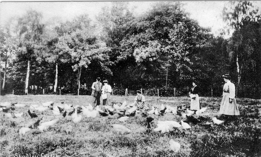 Studley Castle Horticultural College for Women. Chicken pen. Tutor and  students picking out poultry for fattening.  1910 |  IMAGE LOCATION: (Warwickshire County Record Office)