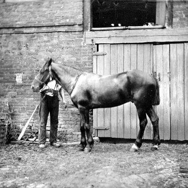 Nuneaton.  Webb's Horse