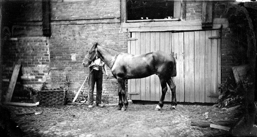 Webb's horse, Nuneaton.  1900s |  IMAGE LOCATION: (Warwickshire County Record Office)
