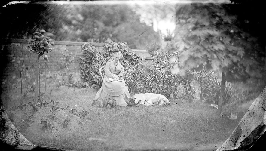 A woman seated in a walled garden with two dogs at her feet and two cats lying under tree, Nuneaton.  1900s |  IMAGE LOCATION: (Warwickshire County Record Office)
