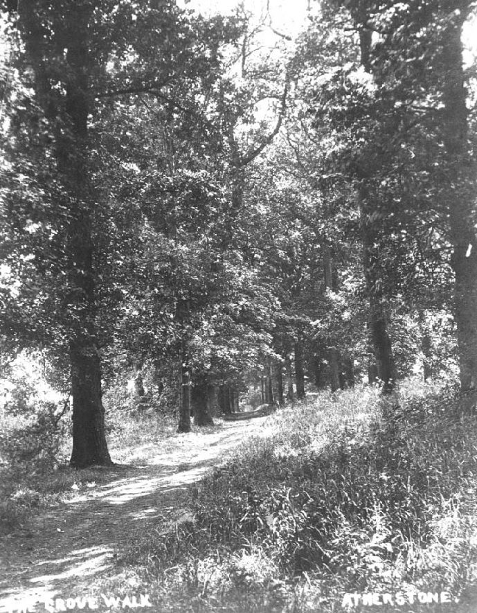 The Grove walk, Atherstone, a country lane through trees.  1900s    IMAGE LOCATION: (Warwickshire County Record Office)
