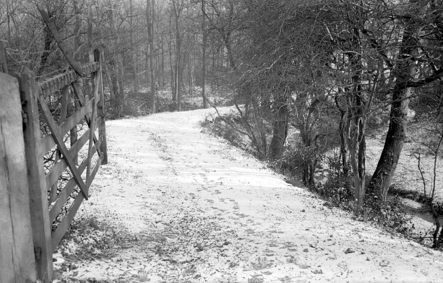 A snow covered path leading into a wood opposite Seawood Pool, Nuneaton.  1952 |  IMAGE LOCATION: (Warwickshire County Record Office)
