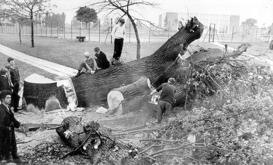 Tree felling at the Avenue Road entrance to the Pingle Fields 1968    IMAGE LOCATION: (Nuneaton Library)