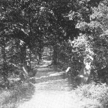 Coleshill.  Chelmsley Woods
