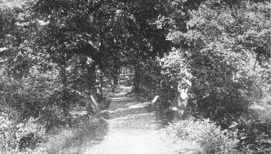 Footpath among the trees in Chelmsley Woods, near Coleshill.  1900s |  IMAGE LOCATION: (Warwickshire County Record Office)