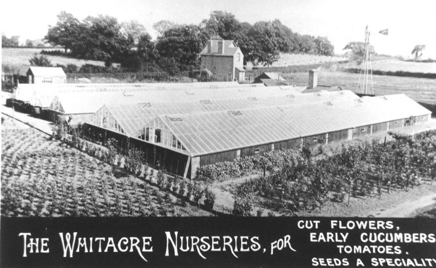 The glasshouses and grounds of the Whitacre Nurseries. Note the wind pump for the water supply.  1930s |  IMAGE LOCATION: (Warwickshire Museums. Photographic Collections.)