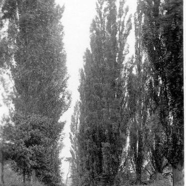 Lea Marston.  The Poplars