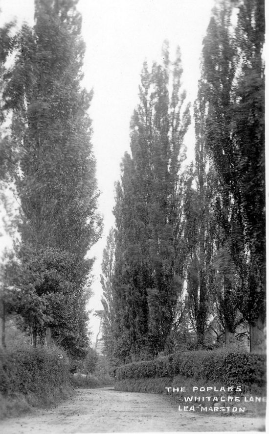The poplars on Whitacre Lane, Lea Marston.  1912 |  IMAGE LOCATION: (Warwickshire County Record Office)
