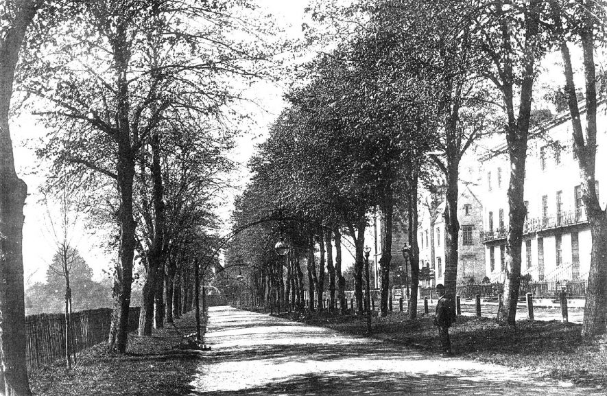 Tree lined avenue known as Linden Walk which is part of the Pump Room gardens, Leamington Spa.  1900s |  IMAGE LOCATION: (Warwickshire Museums. Photographic Collections.)