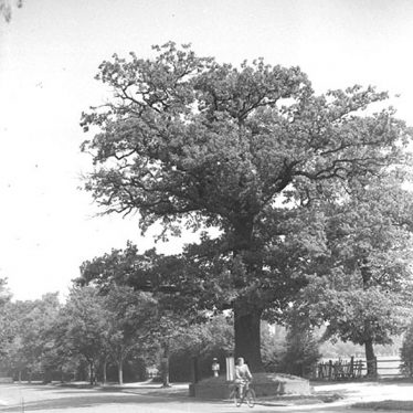 Lillington.  Centre of England Oak Tree