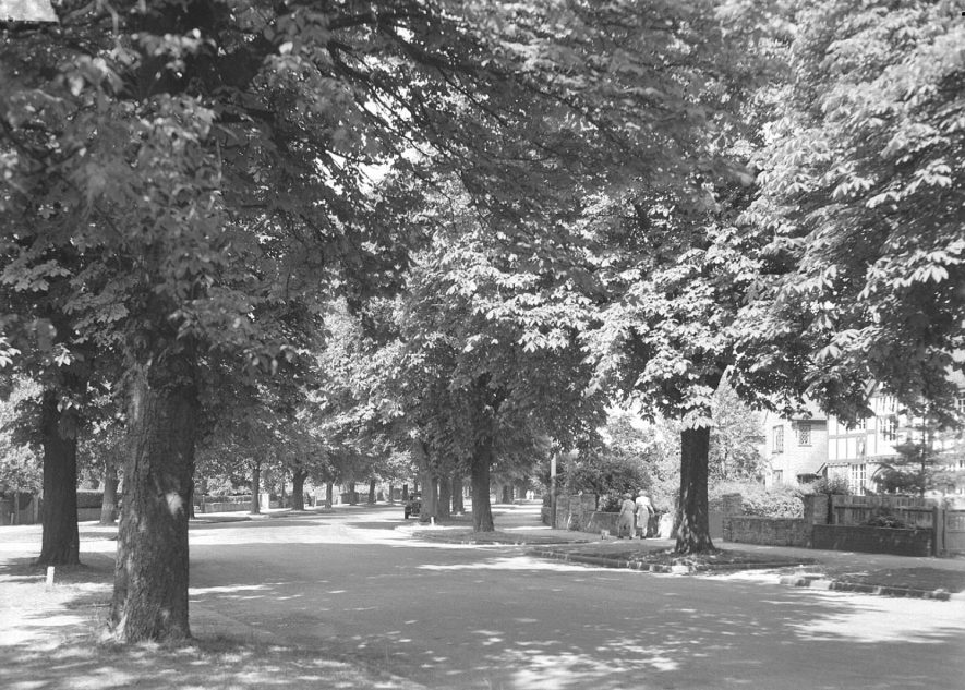 Tree lined Northumberland Road, Leamington Spa.  Circa 1930s |  IMAGE LOCATION: (Warwickshire County Record Office)