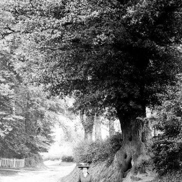 Bearley.  Wooded lane