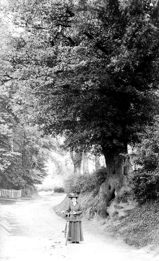 Wooded lane with lady holding bicycle in Bearley.  1900s |  IMAGE LOCATION: (Warwickshire County Record Office)