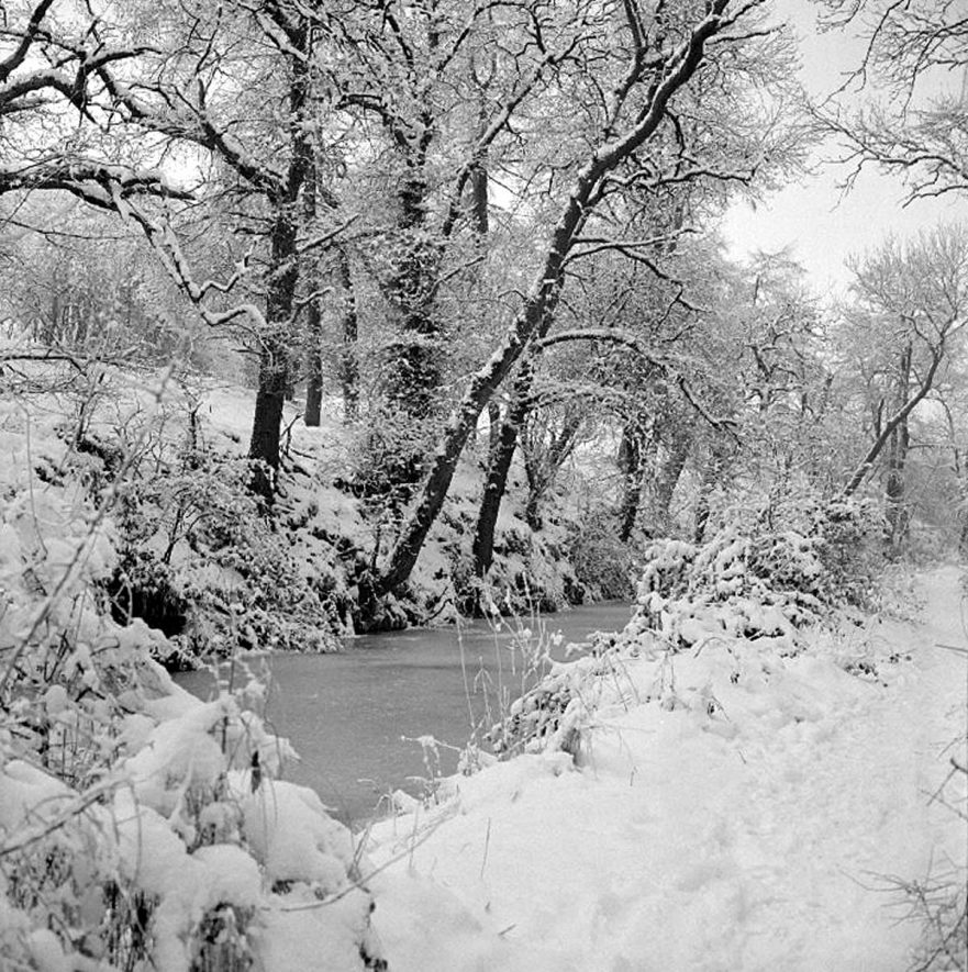 Trees overhanging Red Deeps, near Griff Hollows, on the 27th January 1979.    IMAGE LOCATION: (Warwickshire County Record Office)