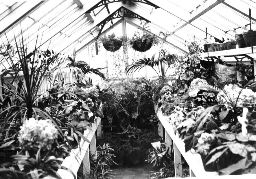 Greenhouse interior, showing a display of plants and flowers and hanging baskets.  Congreve House, Church St (Dr. Orton's House). Bedworth.  c.1910 |  IMAGE LOCATION: (Warwickshire County Record Office) IMAGE DATE: (c.1910)