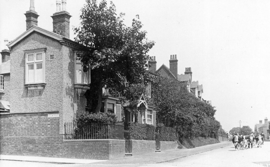 Cattle in Cubbington Road, Leamington Spa.  1913  [Picture is of Lillington and not as shown, Leamington Spa.] |  IMAGE LOCATION: (Leamington Library)