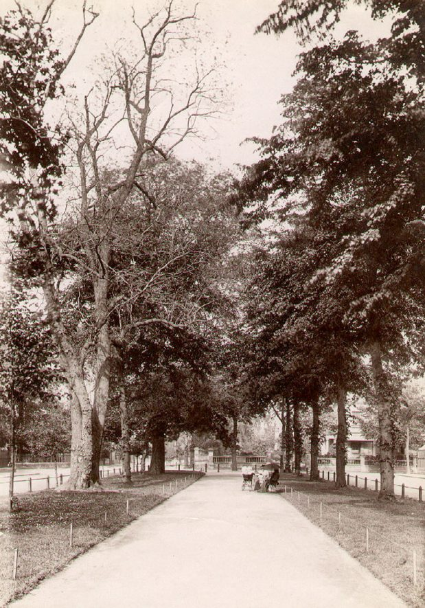 Avenue of trees and ladies sitting on a bench with a pram in Holly Walk, Leamington Spa.  1910s |  IMAGE LOCATION: (Leamington Library)