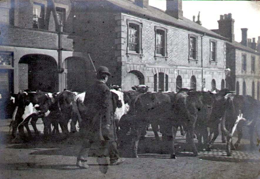 Cattle being driven to market, Albert Street, Rugby.  1880s    IMAGE LOCATION: (Rugby Library)