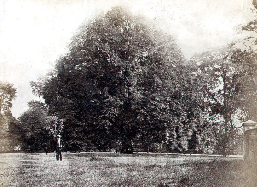 Field with chestnut trees, one man, standing, Rugby.  1880s |  IMAGE LOCATION: (Rugby Library)