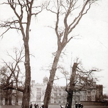 Rugby School.  Three Trees