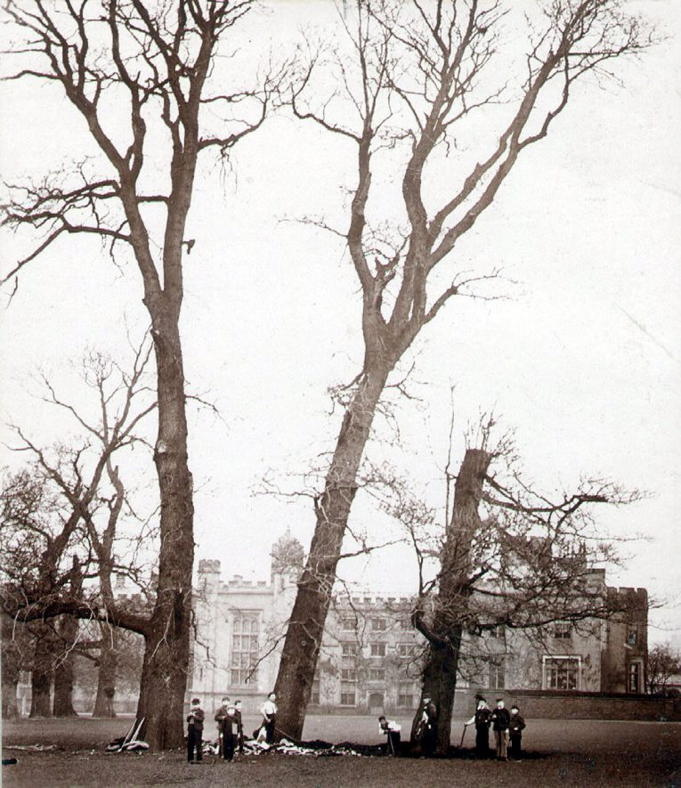 Three trees being felled in School Close, Rugby School.  1900s |  IMAGE LOCATION: (Rugby Library)