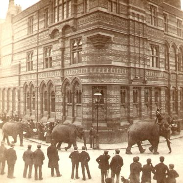 Rugby.  Lawrence Sheriff Street, elephants